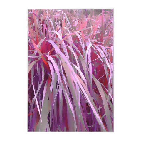 """Obraz v rámu """"Pink grass"""""""