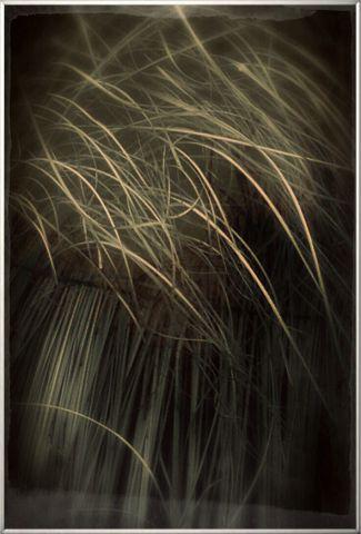 """Obraz v rámu """"Grass"""""""