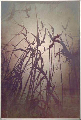 """Obraz v rámu """"Reeds"""""""