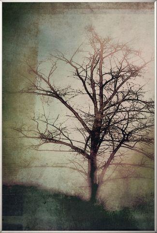 """Obraz v rámu """"Tree"""""""