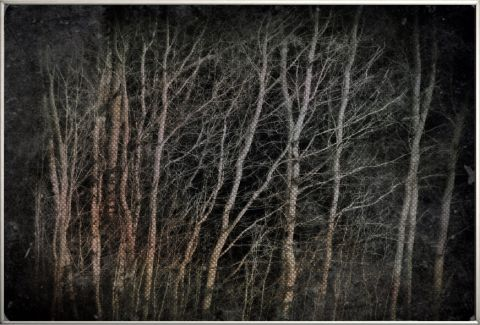 Birches at night