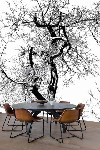 Luxusní vliesová tapeta Old tree